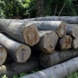Wood preparation — Stock Photo