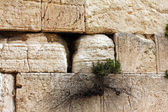 Western Wall, Jerusalem , Israel — Stock Photo
