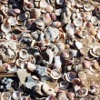 Shells on the beach sand — Stock Photo
