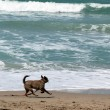 Blur view of the dog running on the beach by the sea — Stock Photo