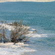 Постер, плакат: Withered Bush in Dead Sea