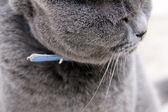 Portrait of a gray cat — Stock Photo