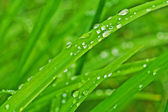 Rain drops on the leaves — Stock Photo