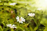 Blommor i skogen — Stockfoto