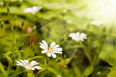 Orman çiçekleri — Stok fotoğraf