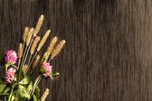 三叶草的树的背景 — 图库照片
