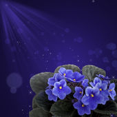 Flowers of violet, design — Stock Photo