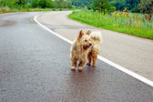 Ein streunender hund auf der straße — Stockfoto