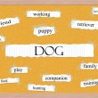 Dog Corkboard Word Concept — Stock Photo