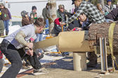 Lumberjack Two Man Bucksaw competition Halfway through — Stock Photo