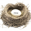 Stock Photo: 401k Nest Egg