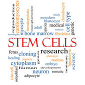 Stem Cells Word Cloud Concept — Stock Photo