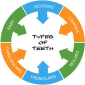 Types of Teeth Word Circle Concept scribbled — Stock Photo