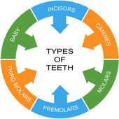 Types of Teeth Word Circle Concept — Stock Photo