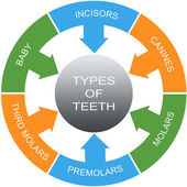 Types of Teeth Word Circles Concept — Stock Photo