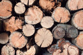 Stacked Logs, natural background image — Stock Photo
