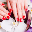 Stock Photo: Manicure red