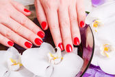 Manicure red — Stock Photo