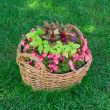 Stock Photo: Beautiful basket of flowers in garden landscape