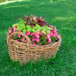Beautiful basket of flowers in the garden landscape - Stock Photo
