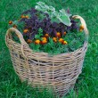 Beautiful basket of flowers in the garden landscape — Stock Photo #12561323
