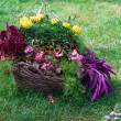 Beautiful basket of flowers in the garden landscape — Stock Photo #12561324