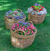 Beautiful baskets of flowers in the garden landscape — Stock Photo