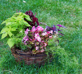Beautiful basket of flowers in the garden landscape — Stock Photo