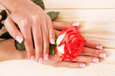 French manicure and red rose — Stock Photo