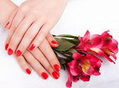 Closeup image of red manicure with flowers — Stock Photo