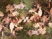 Background of leaf camouflage — Stock Photo