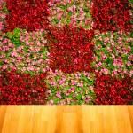 Perfect sweet cherries isolated — Stock Photo #26523007