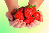 Nádherné jahodové v ženských rukou — Stock fotografie