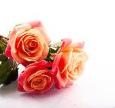 Bellissimo mazzo di rose — Foto Stock