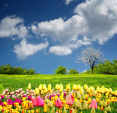 Beautiful spring field — Fotografia Stock