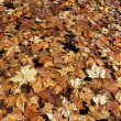 Fallen leaves in autumn — Stock Photo