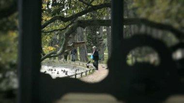 Człowiek jest karmienie kaczek i gołębie w parku w paryżu — Wideo stockowe