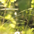 Dense grass and wind — Stock Video