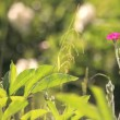 Vídeo de stock: Lonely pink flower in meadow