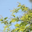 Deciduous tree branches against the blue sky — Stock Video #27824737