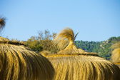 Thatched roofs — Stock Photo