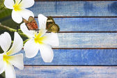 Flower and butterfly on wooden background — Stock Photo