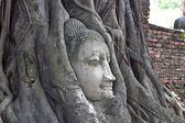 Buddha heads in the tree root Wat Mahathat,Thailand — Stock Photo