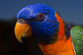 Colorful parrot — Fotografia Stock