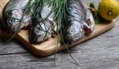 Fish rainbow trout — Stock Photo