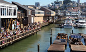 Tourists observe sea lions at Pier 39 in San Francisco — Stock Photo