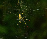 Banana spider — Stock fotografie