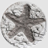 Starfish fossil — Stock Photo