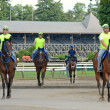 Foto Stock: Warm up at SaratogHorse Track