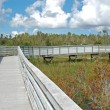 Boardwalk in Everglades swamp park — Stockfoto